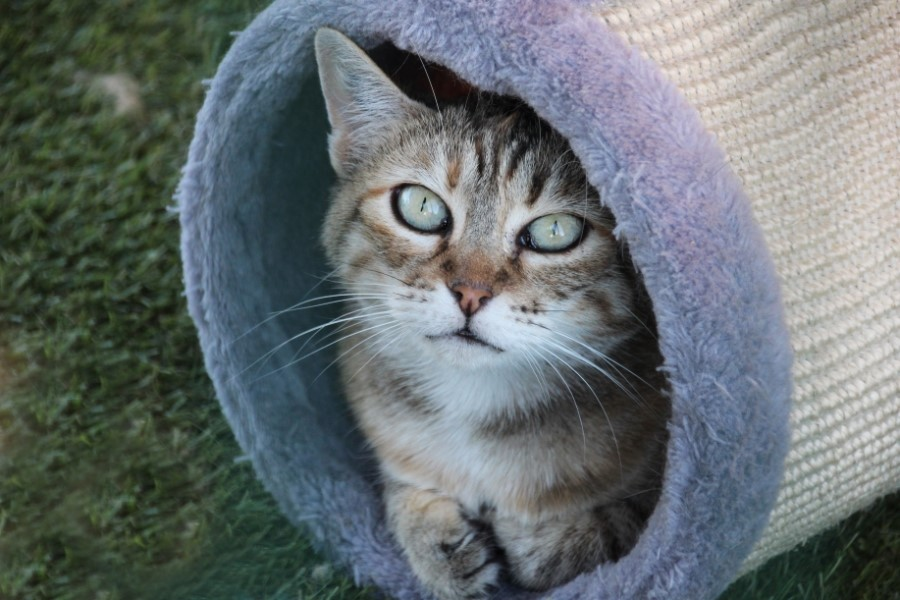 Chat dans rouleau de mousse