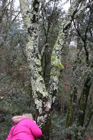 Tronc d'arbre avec lichen