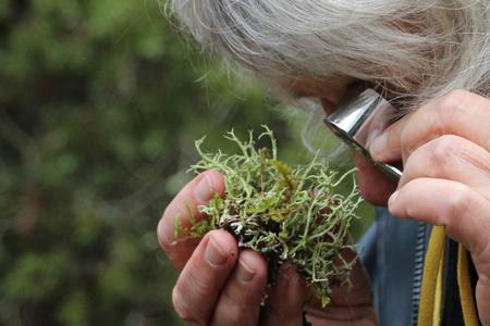Les Balades de L'œil Vert | Flash sur Le lichen
