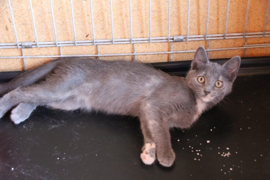 Chat couché dans une cage