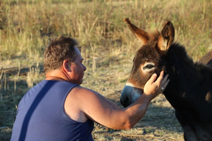 Homme avec âne