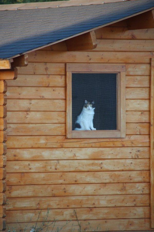Chat dans un chalet