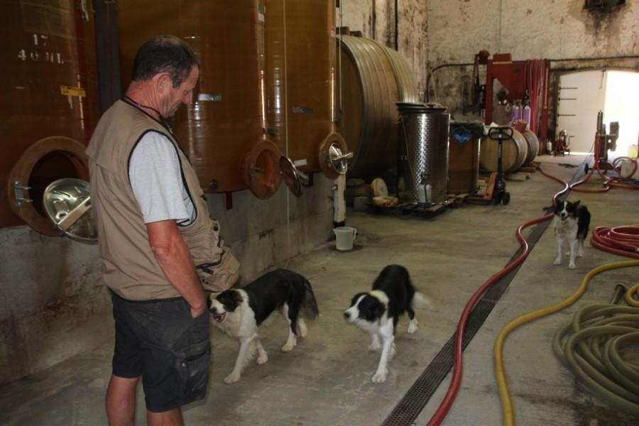 Cave vigneron acec chiens