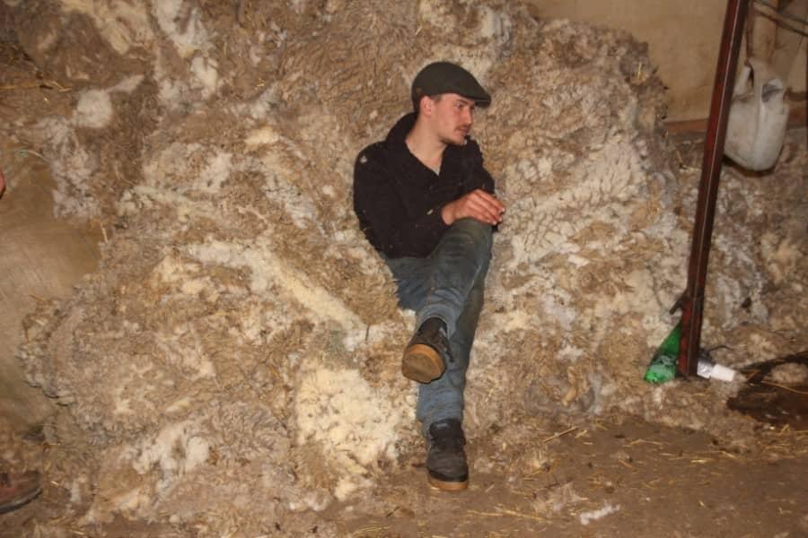 Berger assis sur un tas de laine