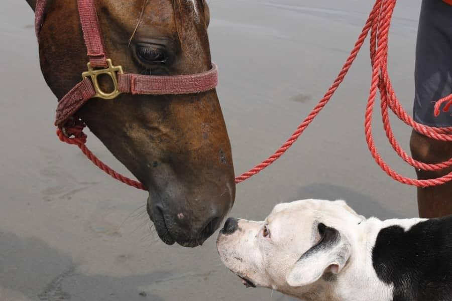 Bêtes amies chien et cheval