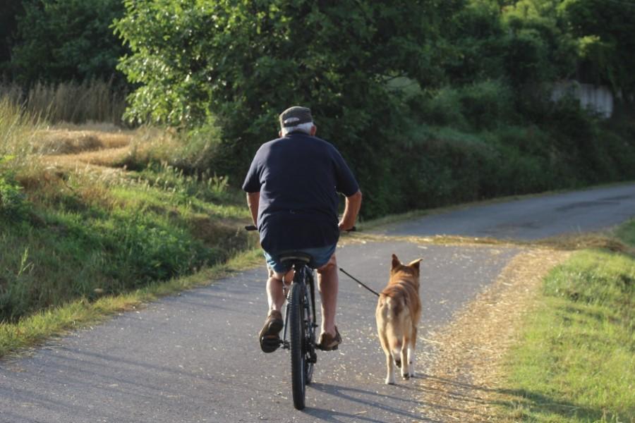 Homme promenant son chien à vélo