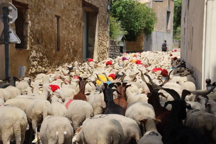 Saint-Mamert du Gard | En route pour l'estive 2021